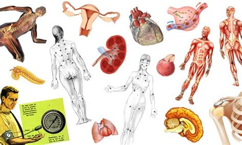 Campos de la biología humana   Biología Humana