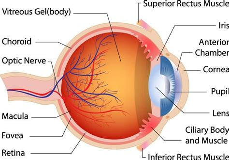 Can you name the parts of the eye? Do you know how each ...