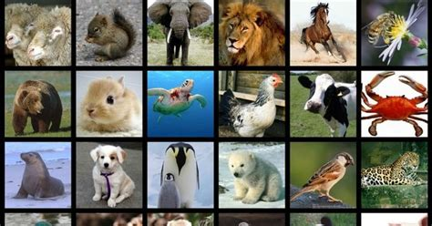 Can You Name These Rare Animals? | Playbuzz