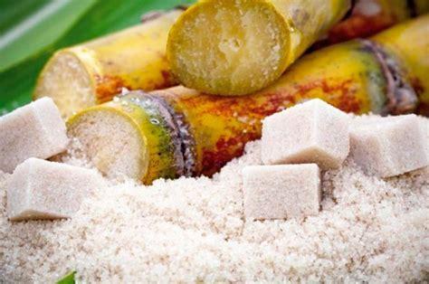 Caña de azúcar, el cultivo más importante del planeta ...