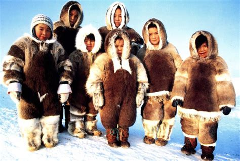 """Canadian Inuits: There May Be """"Too Many Polar Bears Now ..."""