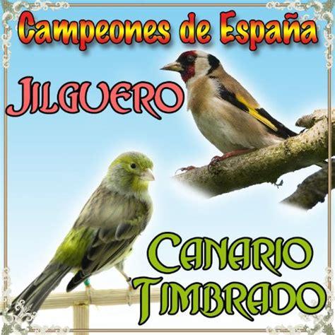 Canario Timbrado y Jilguero, Campeones de España by Sonido ...