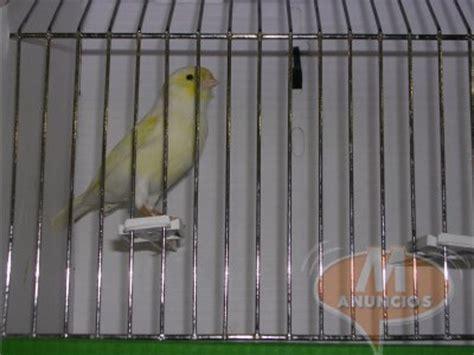canarios en venta Cadiz 28267843
