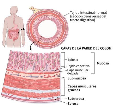 Cancer de colon en la etapa 4, Cancer tratamiento hormonal