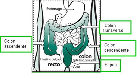 Cáncer de colon y recto   SEOM: Sociedad Española de ...