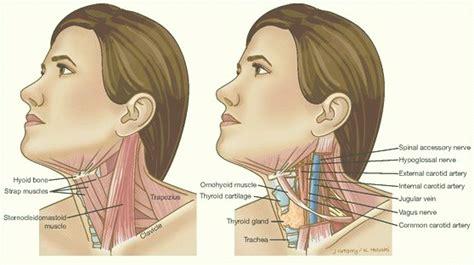 cáncer de tiroides y los ganglios linfáticos … – Straig