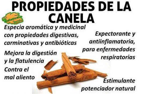 Canela Propiedades Y Beneficios   SEONegativo.com