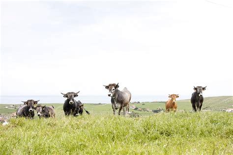 Cantabria convoca las ayudas para estimular el cebo de ...