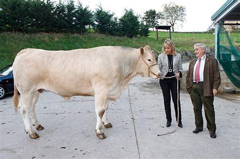 Cantabria Occidental: Ganadería inyecta esta semana 9 ...