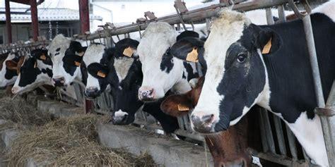 Cantabria reparte más de 2,4 millones de euros en ayudas ...
