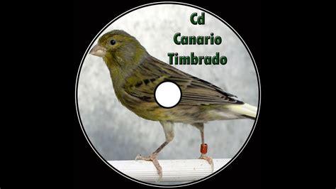 Canto canario timbrado español   YouTube