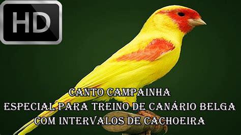 CANTO DE CANÁRIO BELGA CAMPAINHA PURO   6 HORAS COM ...