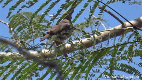 Canto de los pájaros.   YouTube