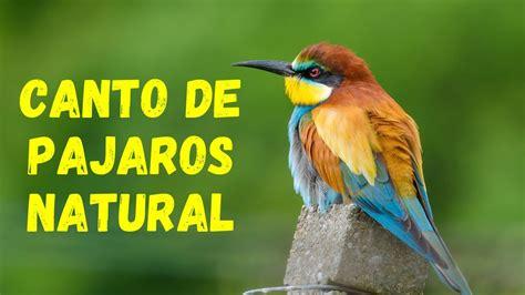 CANTO de PAJAROS para DORMIR   Sonidos de la Naturaleza ...