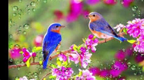 CANTO DE PAJAROS...RELAJANTE   Pájaros hermosos, Fondo de ...