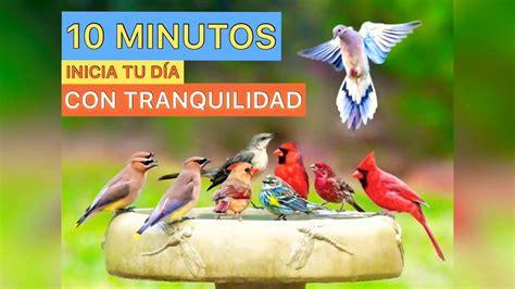 Canto de Pájaros, Sonido de Ambiente para DORMIR o ...