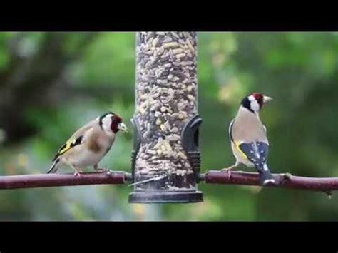 Canto de pájaros y piano Música relajante , no ...