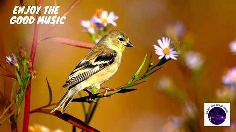 Cantos de Gorriones   Pájaros cantando   Sonido de ...