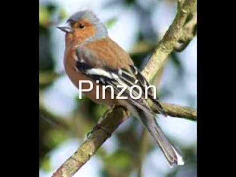 Cantos de Pájaros de Nuestros Campos Ok   YouTube