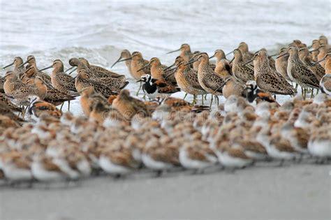 Capas de aves costeras foto de archivo. Imagen de ...