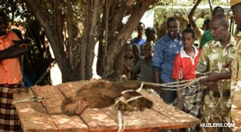 Capturan un velociraptor vivo en el norte del Congo ...