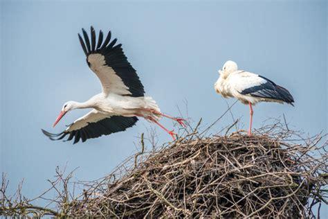 Características comunes de aves zancudas — Mis animales
