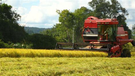 Características, cultivos y ventajas de la agricultura ...
