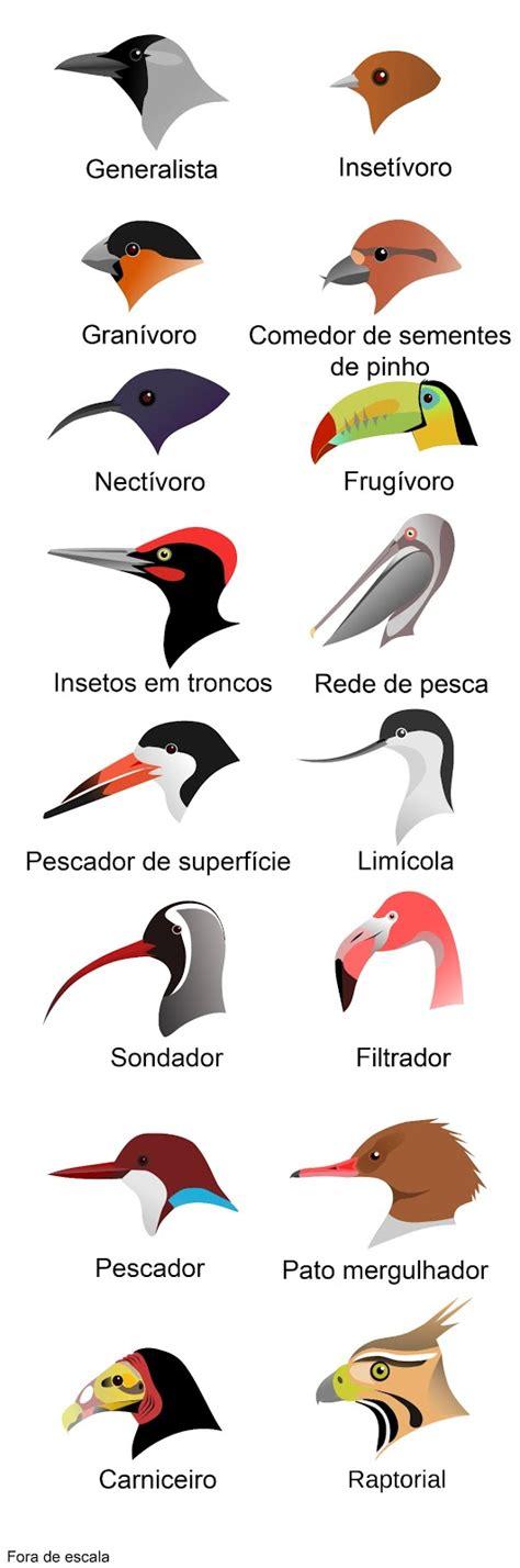 Características das aves | MyBrain