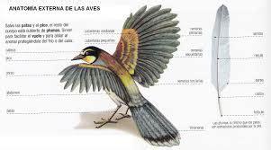 caracteristicas de las aves unos animales estupendos desde ...