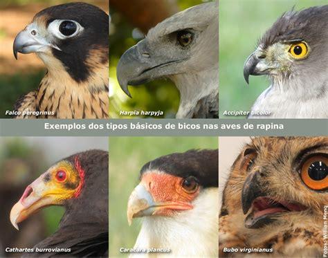 Características gerais das aves de rapina | Aves de Rapina ...