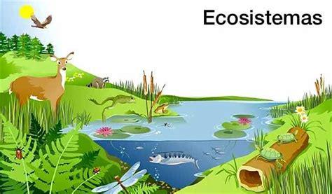 Características y generalidades de un ecosistema ...
