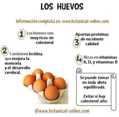 Características y Partes   Sitio huevos