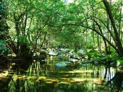 Características y tipos de ecosistemas