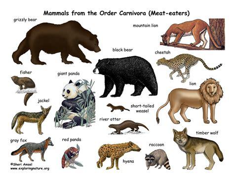 Carnivores  Order  Poster