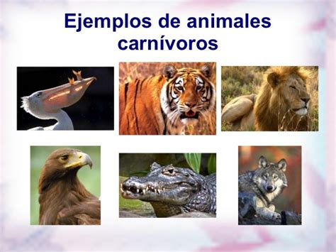 CARNIVOROS, HERVIBOROS, OMNIVOROS   Animals, Animal tattoo ...