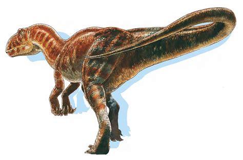 Carnivorous Carcharodontosaurus   Large Dinosaurs