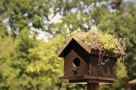 Casa para pájaros | Descargar Fotos gratis