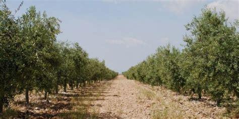 Casa Pareja. Almazara ecológica en Murcia