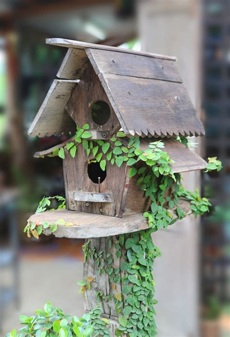 Casas de madera para pájaros cubiertas con hiedra | Foto ...