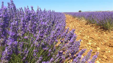 Castilla La Mancha publica la orden de ayuda a las plantas ...