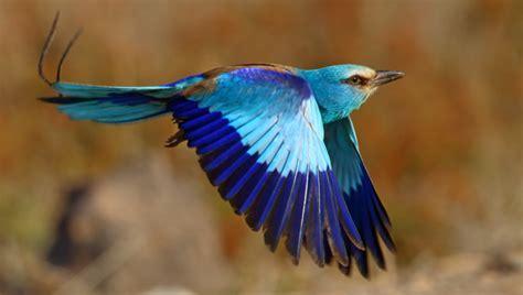 Catalogan 93 nuevas especies de aves raras en España ...