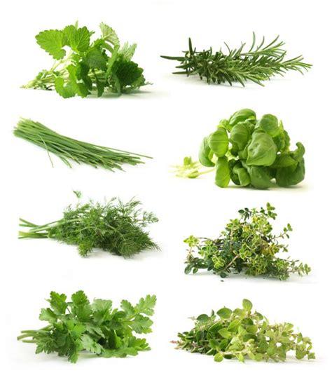 Categories of Herbs