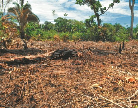 Causas deforestación en Amazonas de Colombia, redes ...