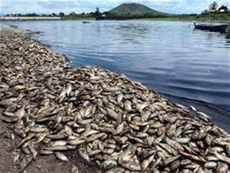 Causas y consecuencias de la contaminacion ~ causas ...