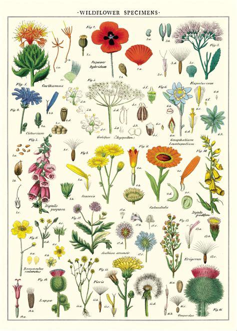Cavallini and Co. | Decorative Wrap | Wildflowers