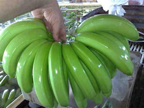 Cavendish Banana   Buy Fresh Green Cavendish Bananas ...