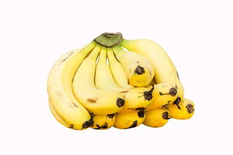 Cavendish banana | Wiki | Everipedia