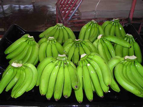 Cavendish Bananas   Buy Cavendish Bananas Product on ...