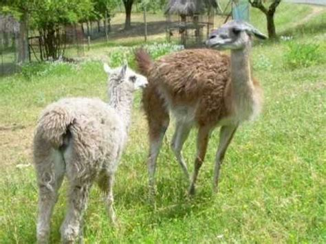 Cavriglia Zoo Arezzo Tuscany Italy   YouTube
