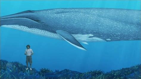 CBBC Newsround   Animals   Giant whale rescued from beach